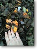 Finding chantrelles