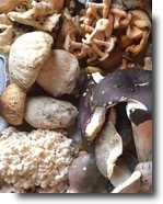 choice edible mushrooms